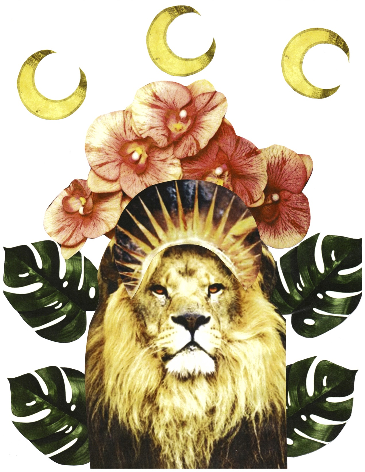 Shine Forth: The New Moon in Leo