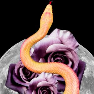 Full Moon in Scorpio – April 2018