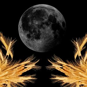 Affirmation Horoscopes for the  New Moon in Virgo – September 2018