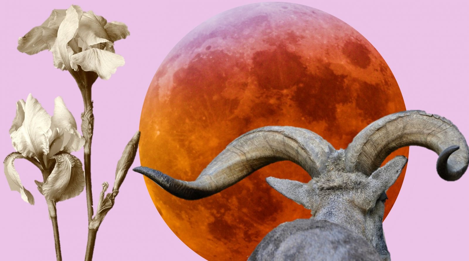 Horoscopes for the Lunar Eclipse in Capricorn - July 2019 ~ Chani
